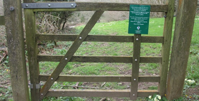 Gate to the meadow in the Rosemoor Nature Reserve - Pembrokeshire West Wales