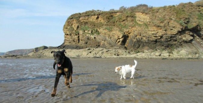 Pet Dogs Douca & Rosie at Broad Haven Pembrokeshire Wales