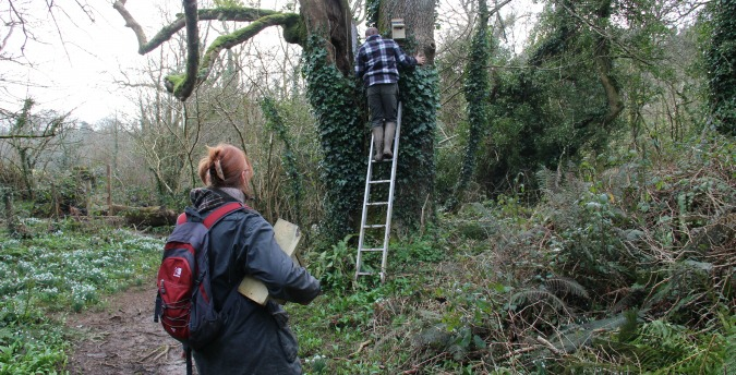 Putting up bird boxes in the Rosemoor Nature Reserve - Pembrokeshire West Wales